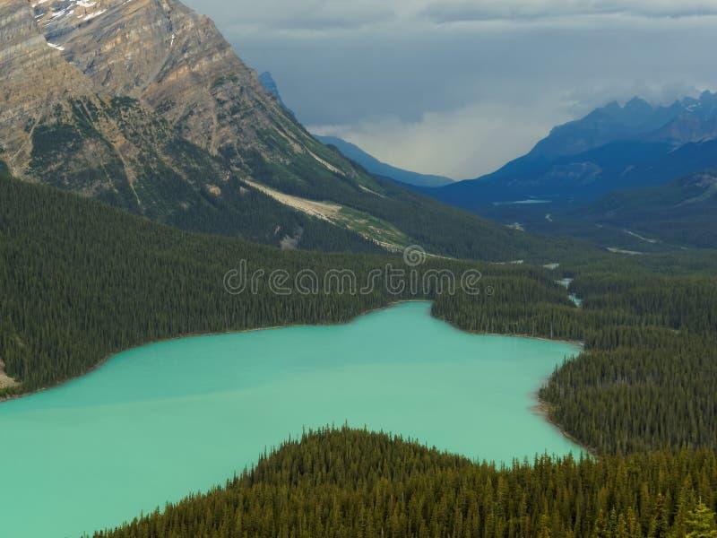 Живое озеро Peyto окруженное скалистыми горами стоковая фотография