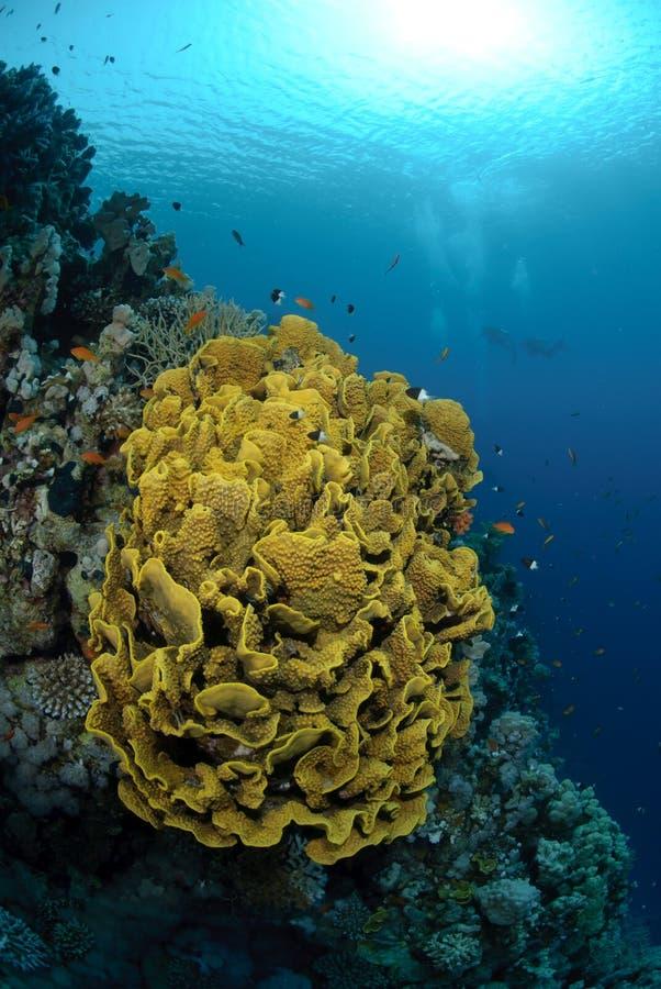 живое цветастого рифа тропическое стоковые фотографии rf
