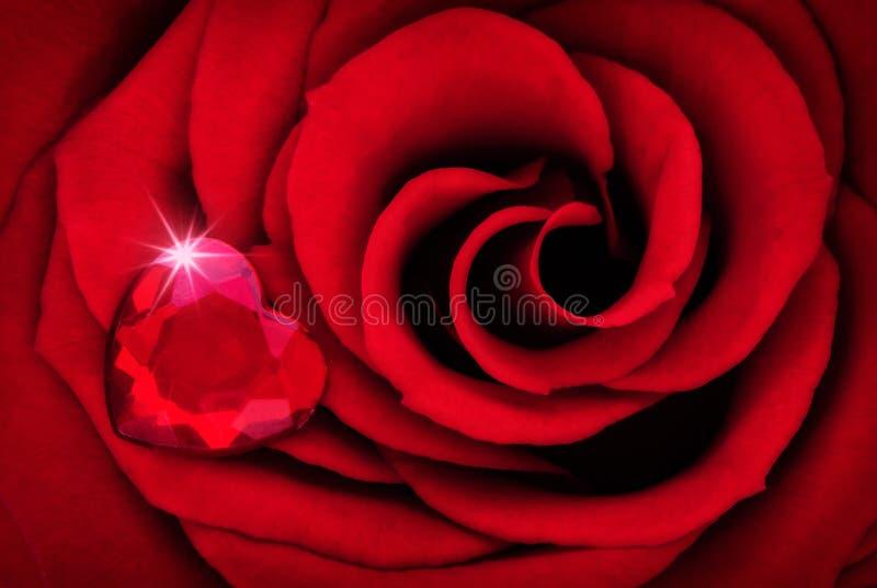 Живой конец красной розы вверх по макросу с рубиновым сердцем стоковое изображение rf