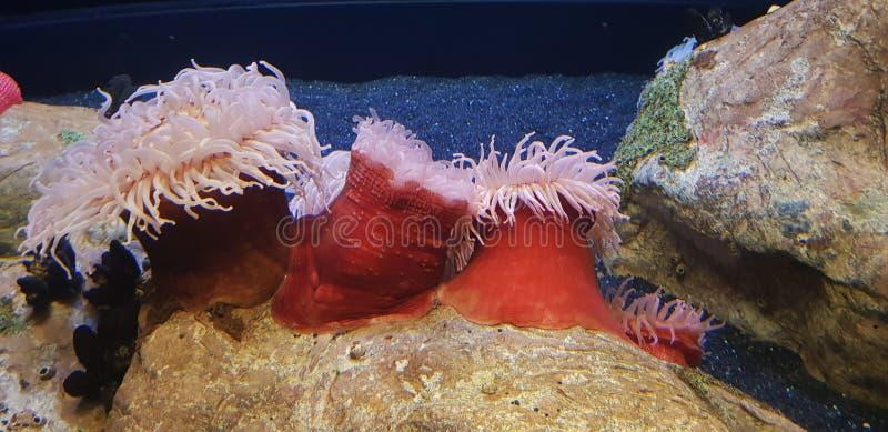 Живой красочный коралловый риф в Лиссабоне Oceanarium стоковая фотография