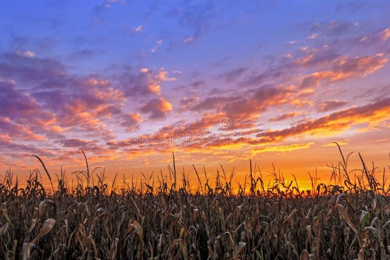 Живой сбор осени - заход солнца над Midwest стоковые фотографии rf