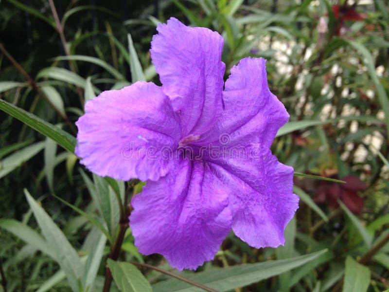 Живой фиолетовый цветок стоковые изображения rf