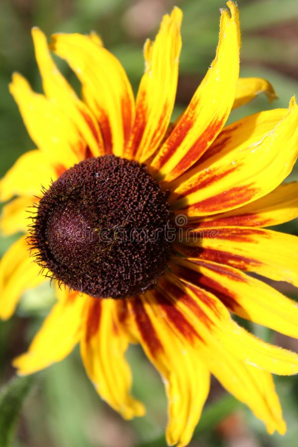 Живой цветок стоковое фото