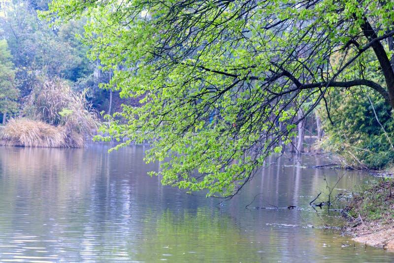 Живописная местность озера дерев-Наньчан Mei берега озера стоковое фото rf
