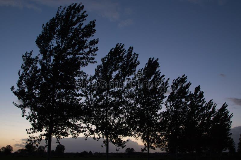 Живописные деревья на сумраке стоковые изображения rf