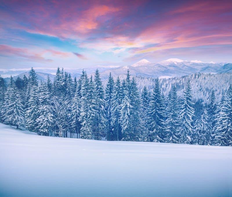 Живописный восход солнца зимы в прикарпатских горах с cov снега стоковые изображения