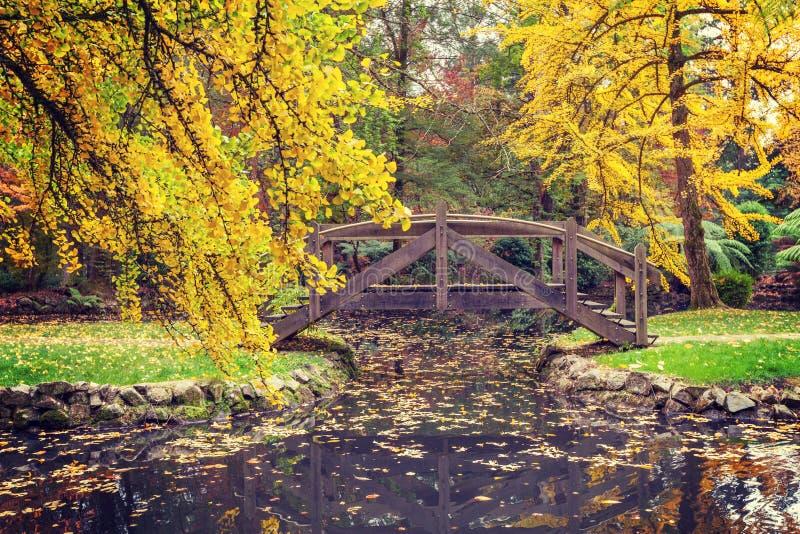 Живописный деревянный footbridge над прудом в осени стоковая фотография rf