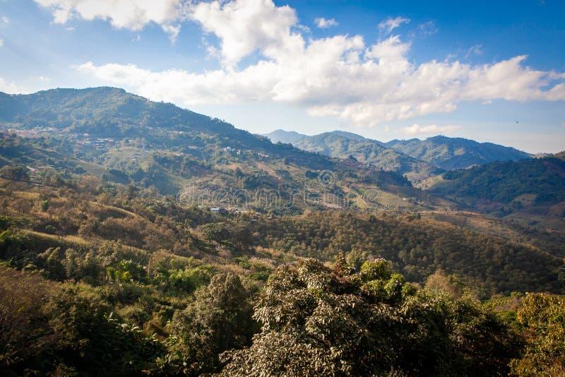 Живописный к долине Doi Mae Salong с холмами, плантациями чая и туманом на восходе солнца стоковое изображение