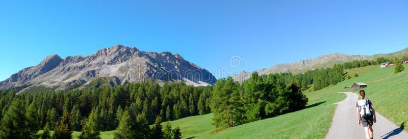 Живописный ландшафт горы лета панорамы в швейцарских Альп около Savognin с зелеными лугами и pe леса и скалистой горы стоковые изображения rf