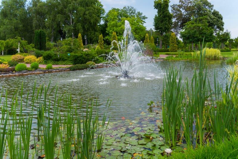 Живописный ландшафт пруда с прозрачным фонтаном в середине при вод-лилии и тростники растя на стоковая фотография rf