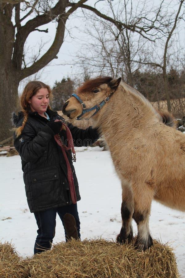 животная персона лошади девушки приятельства стоковые изображения rf