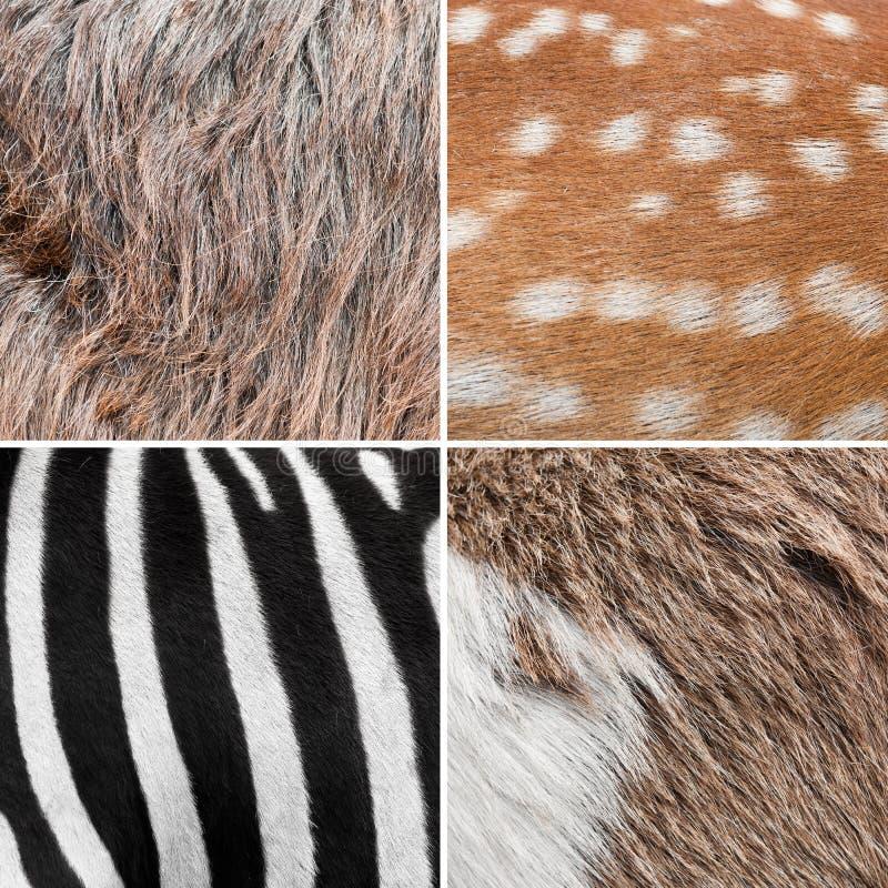 животная шерсть предпосылки стоковое изображение