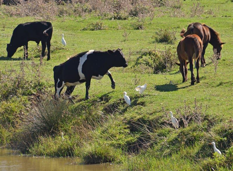 Животноводческие фермы стоковые фото
