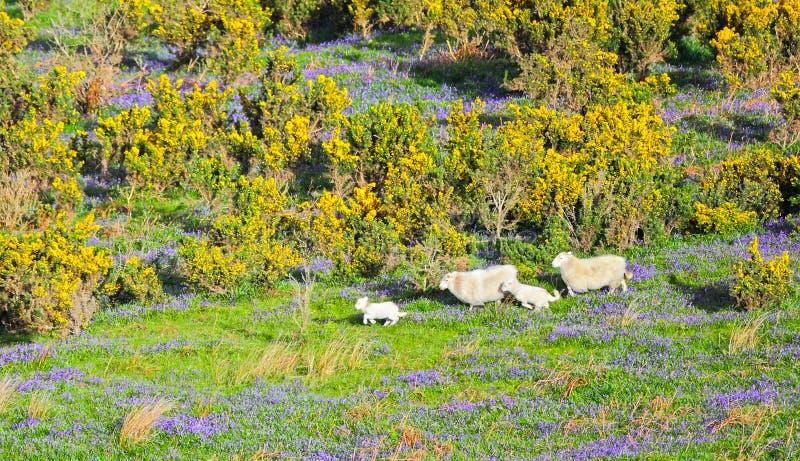 Животноводческие фермы весны стоковое изображение