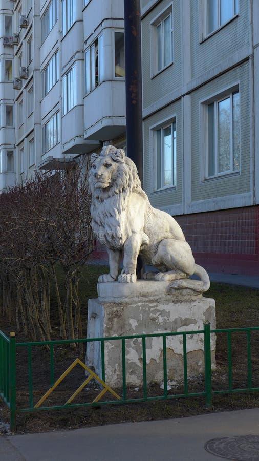 животное близким львом сделало сафари изображения парка к очень стоковые фото