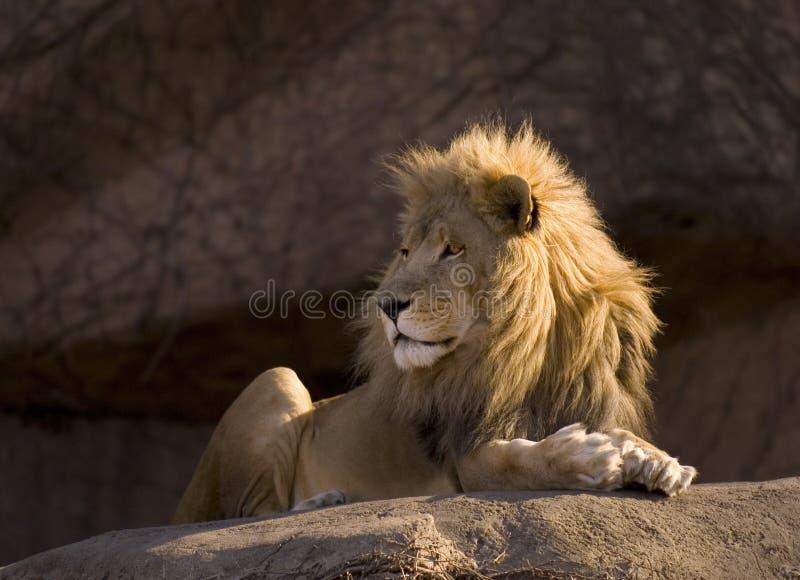 животное грациозно стоковая фотография