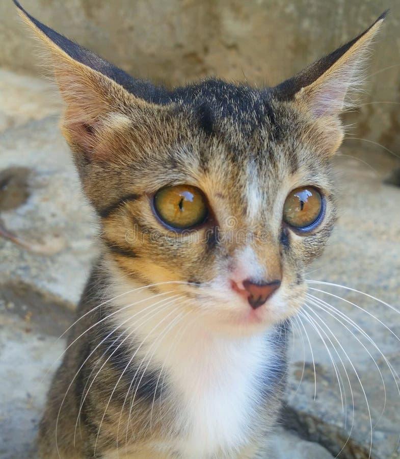 Животное кота унылое стоковые фотографии rf