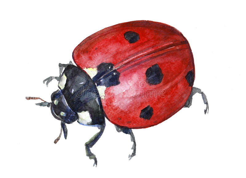 Животное насекомого ladybug акварели одиночное иллюстрация штока
