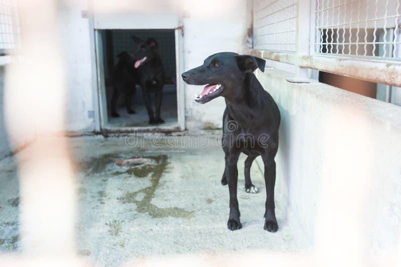 животное укрытие собаки стоковые фото