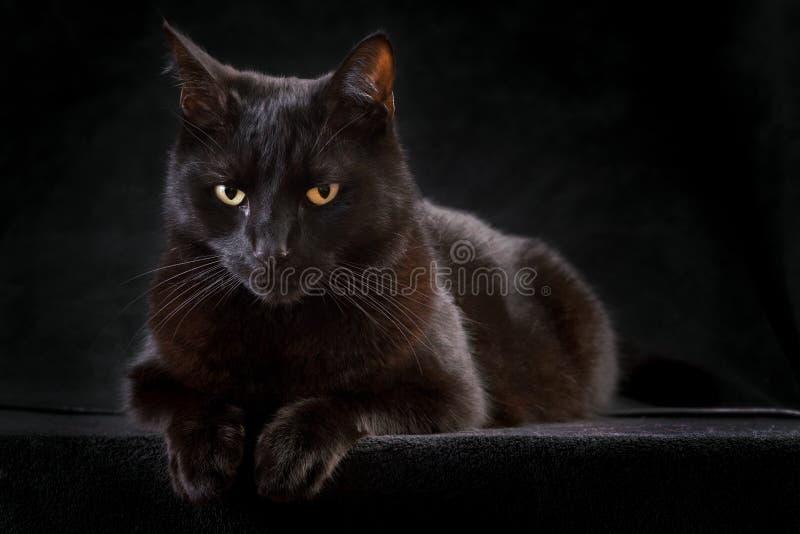 животное усаживание ночи черного кота любознательное загадочное стоковые фото