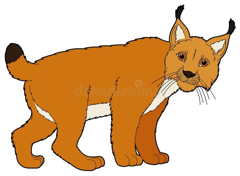 Животное шаржа - рысь - иллюстрация для детей иллюстрация вектора