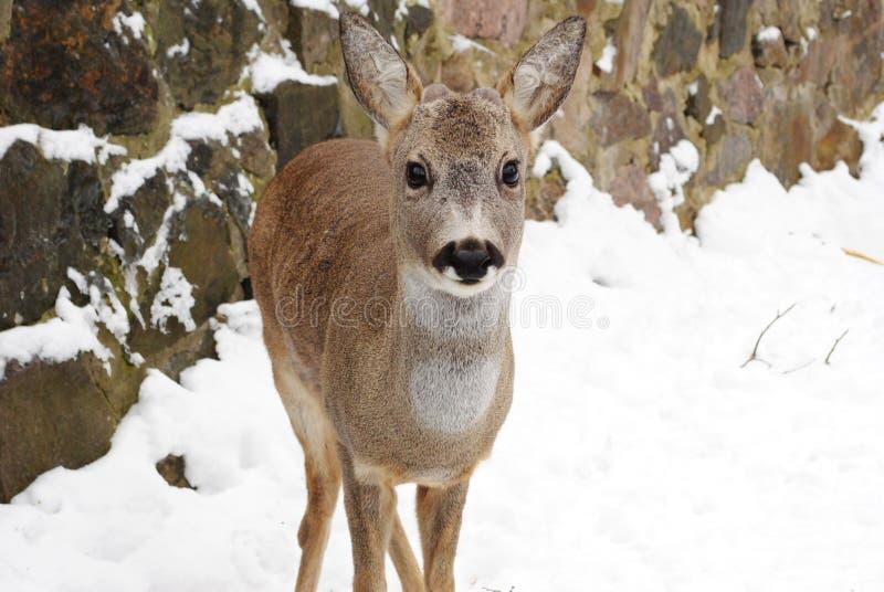 Животное любит люди стоковое фото rf