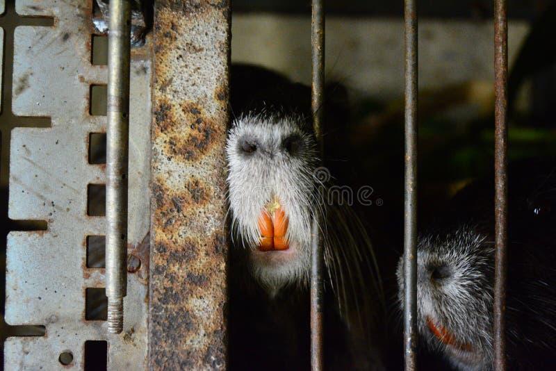 Животное стоковые фотографии rf