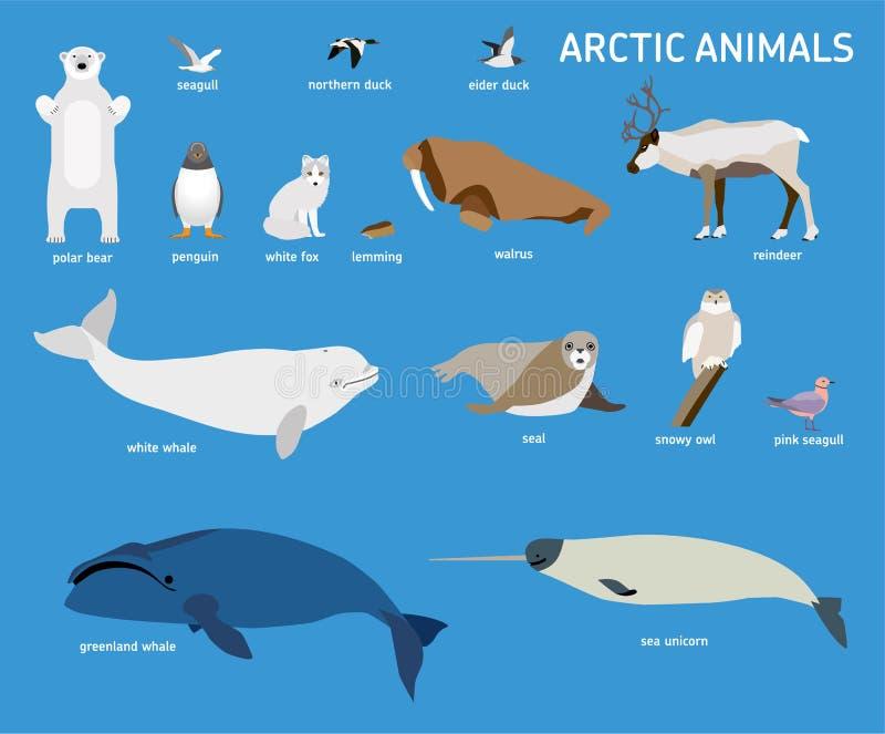 Животные арктики Комплект вектора приполюсных млекопитающих и птиц иллюстрация вектора
