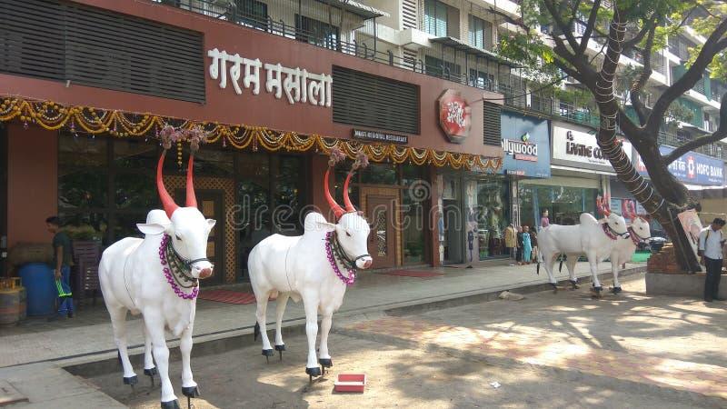 Животные быков стоковое изображение