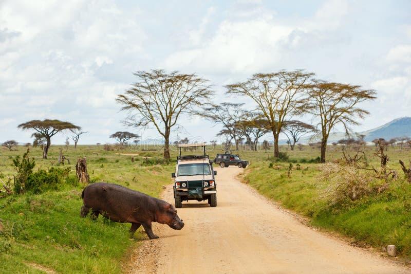 животные вокруг кратера автомобилей управляют сафари Танзанией ngorongoro игры стоковые фото