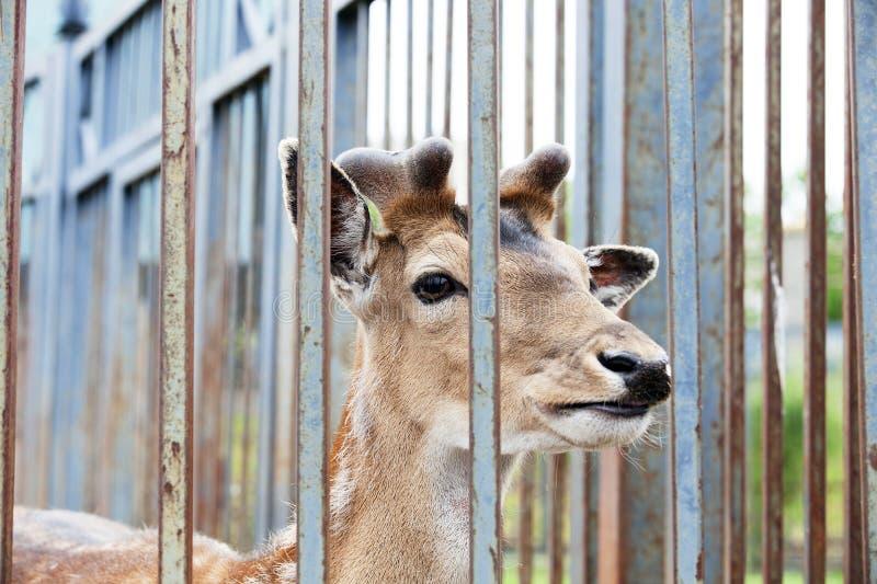 Животные в зоопарке стоковая фотография rf