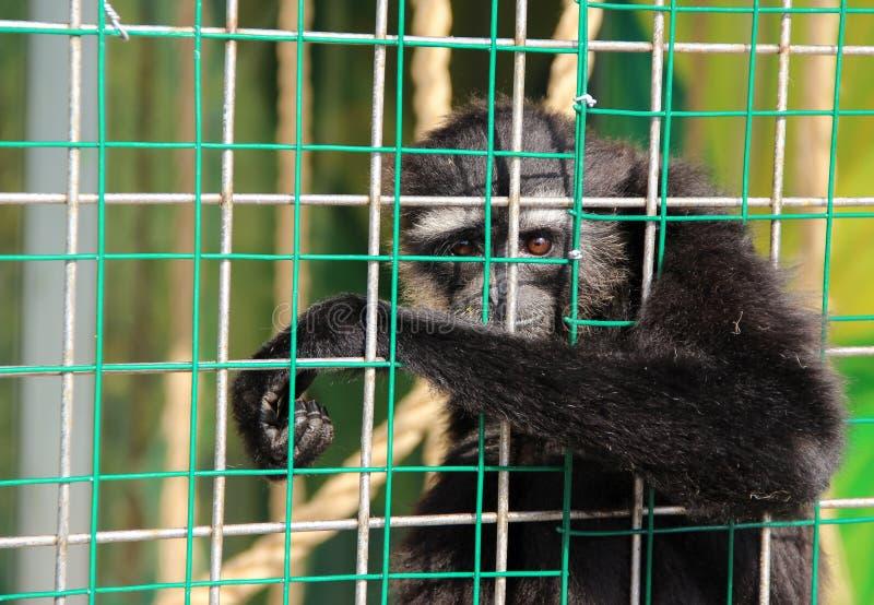 Животные в клетке стоковая фотография rf
