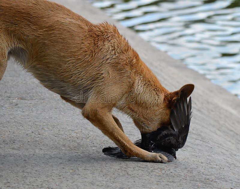 Download Животные звероловства. нападение Стоковое Изображение - изображение насчитывающей природа, парк: 33731445