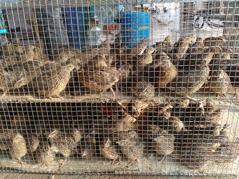 Животные и птицы стоковое фото rf