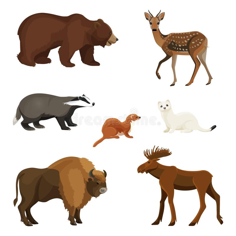 Животные леса с пушистым мехом, хищники и травоядный комплект иллюстрация штока