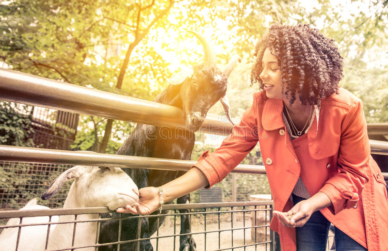 Животные молодой женщины подавая на зоопарке стоковое изображение rf