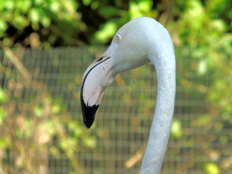 Животные на подсобном хозяйстве на зоопарке с животными живой природы стоковые фото