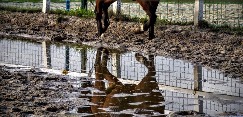 Животные, одичалый, свободные, дорога стоковое фото