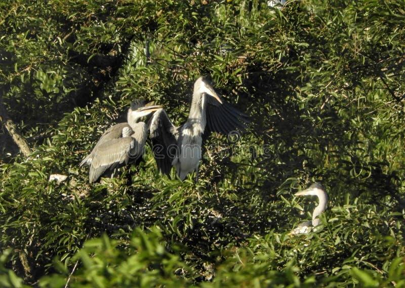 Животные птицы наблюдают за группой на заднем фоне зеленого растения стоковая фотография rf