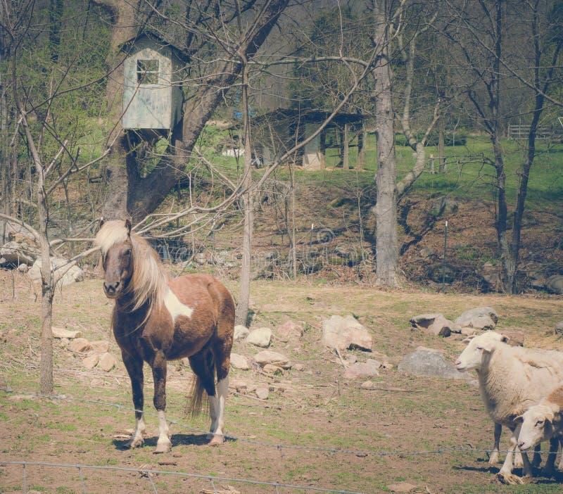 Животные скотного двора перед старым голубым домом на дереве стоковая фотография