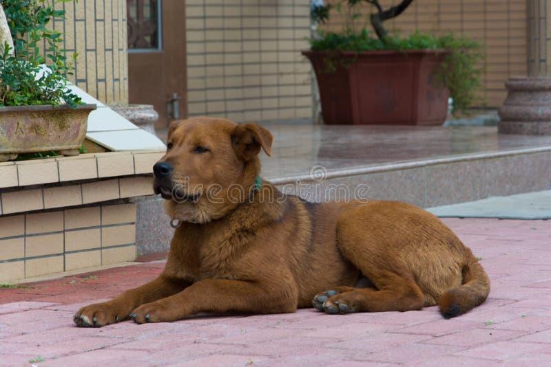 Животные собака и петух кота острословия стоковое фото rf