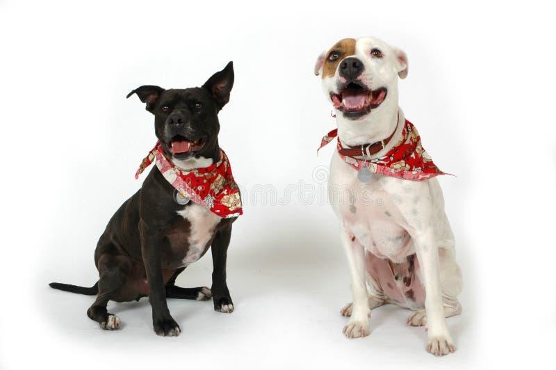 животные счастливые стоковое фото rf