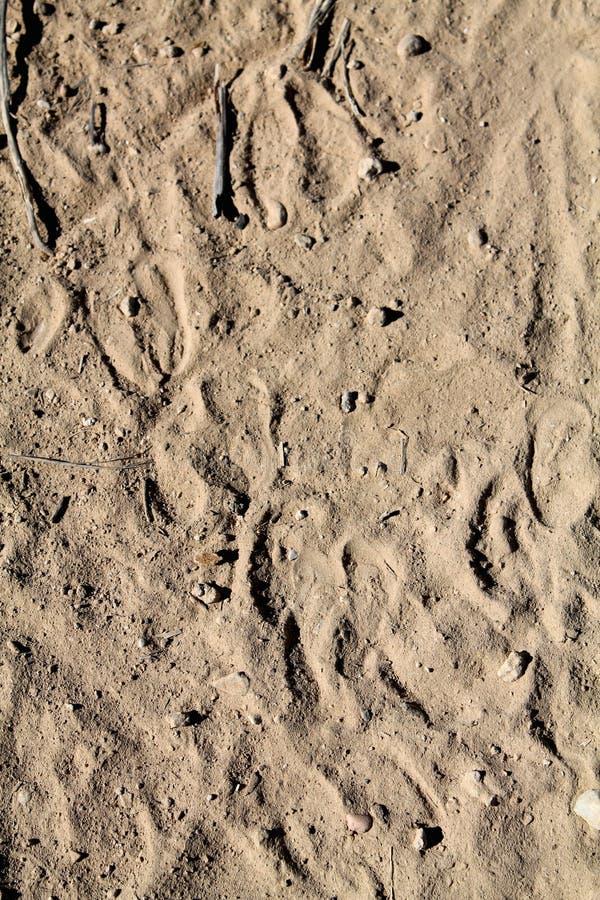 Животные следы ноги стоковые изображения rf