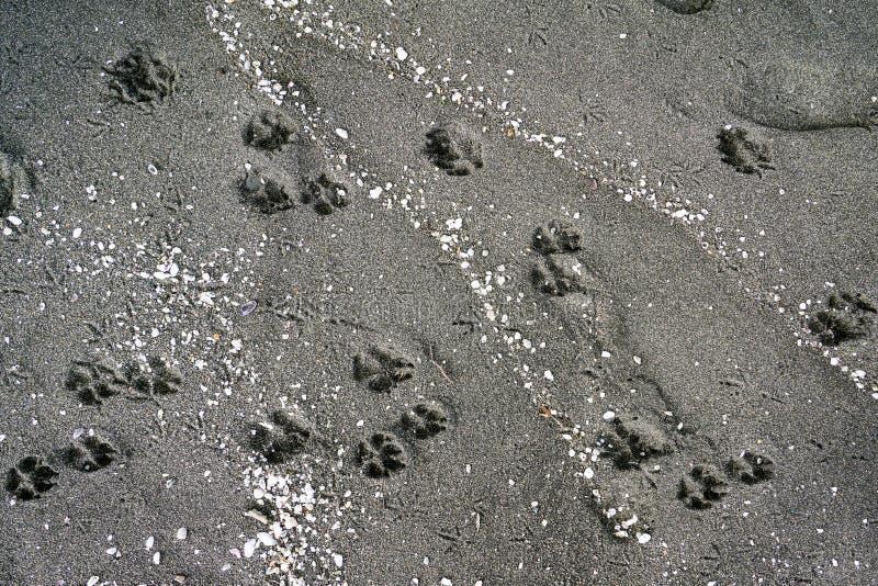 Животные трассировки и раковины в песке на seashore, пляже отработанной формовочной смеси - Чёрном море, Грузии, красивой предпос стоковые фото