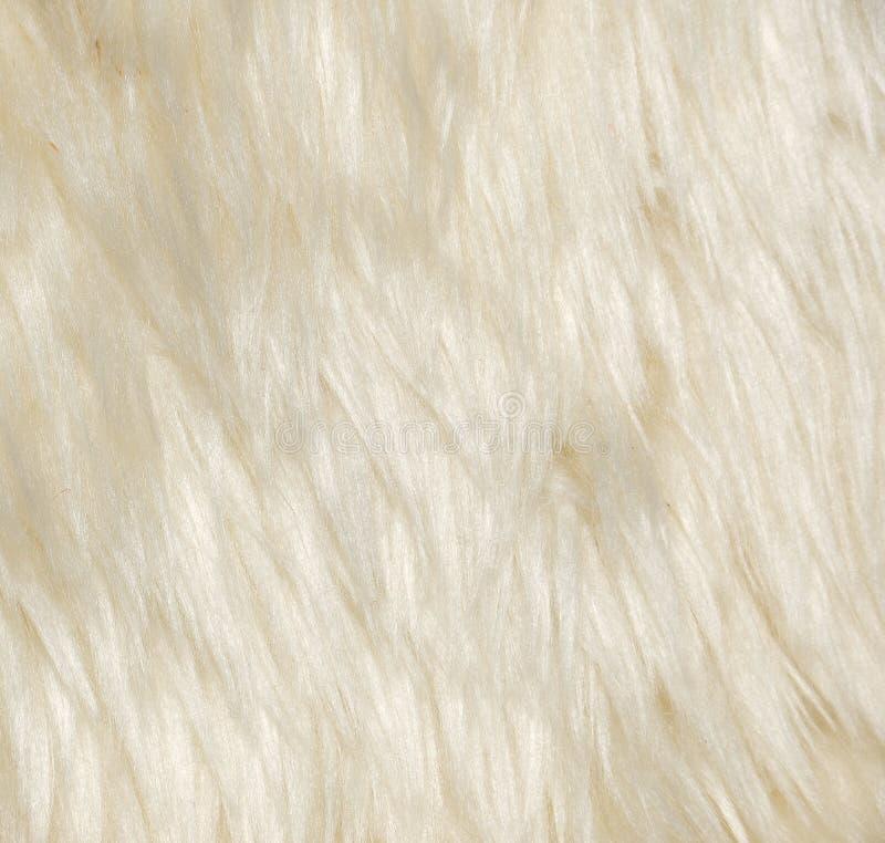 животные шерсти стоковое изображение rf