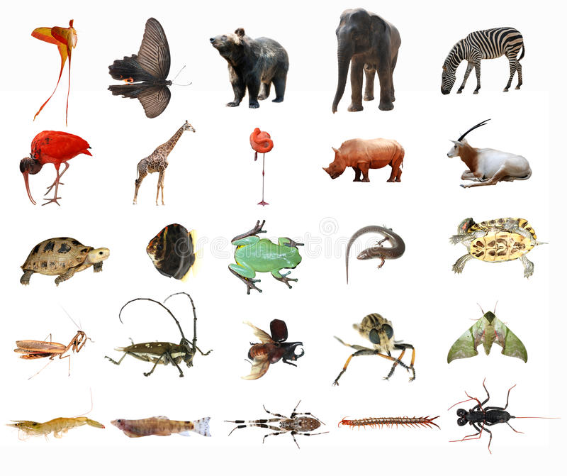 животные стоковое фото rf