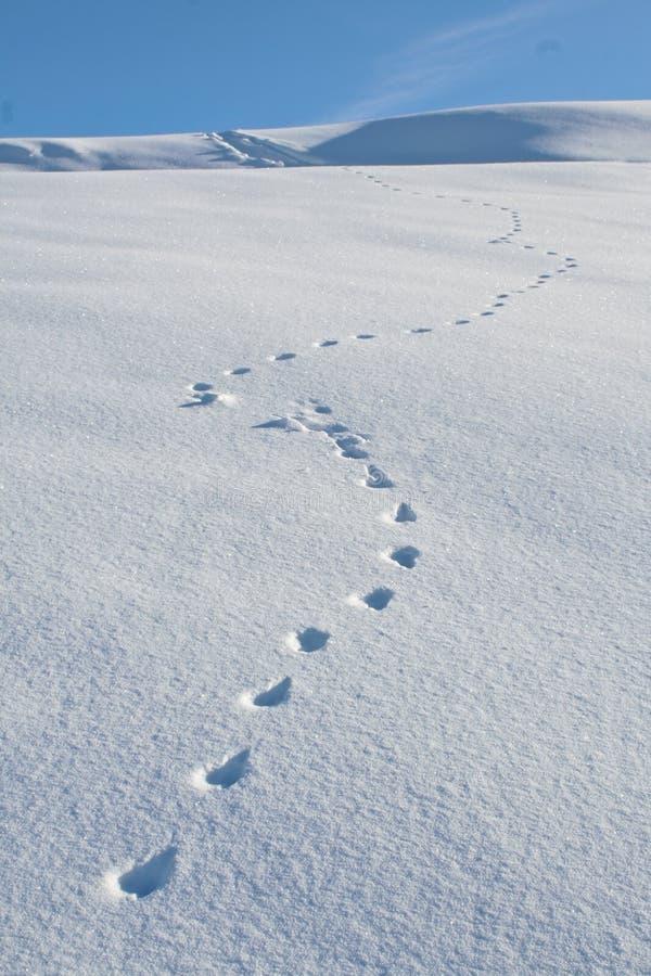 животный снежок отслеживает зиму стоковое изображение rf