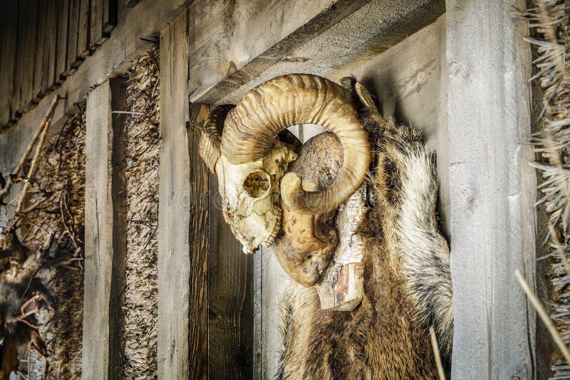 Животный череп с рожками приближает к старому деревянному зданию стоковые изображения