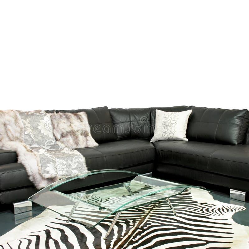 живущая зебра комнаты стоковое фото rf