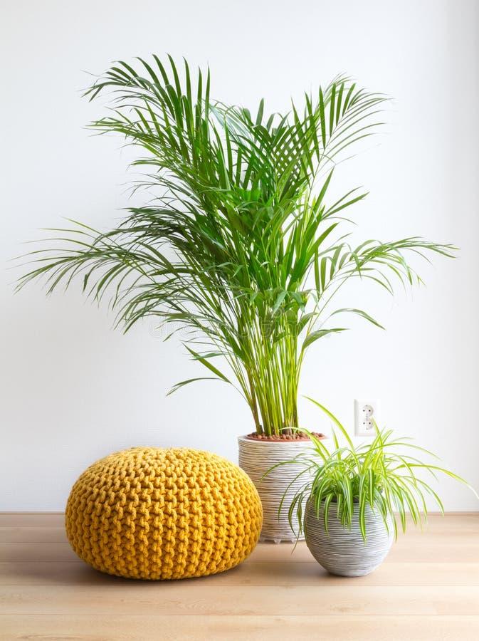 Живущая комната с комнатными растениями и pouf стоковое изображение rf